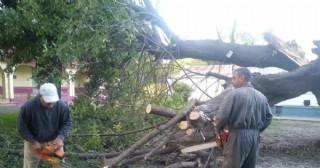 Extracción de Árboles en el Jardín 905 de la localidad de Sarasa