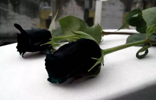 Falleció el 10/11/2018 a los 91 años de edad. Sus restos recibieron sepultura el 10/11/2018 a las 16 horas en el Cementerio Parque el Prado.