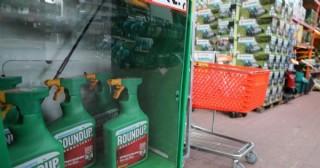 Retrasan juicio contra Monsanto por herbicida con glifosato
