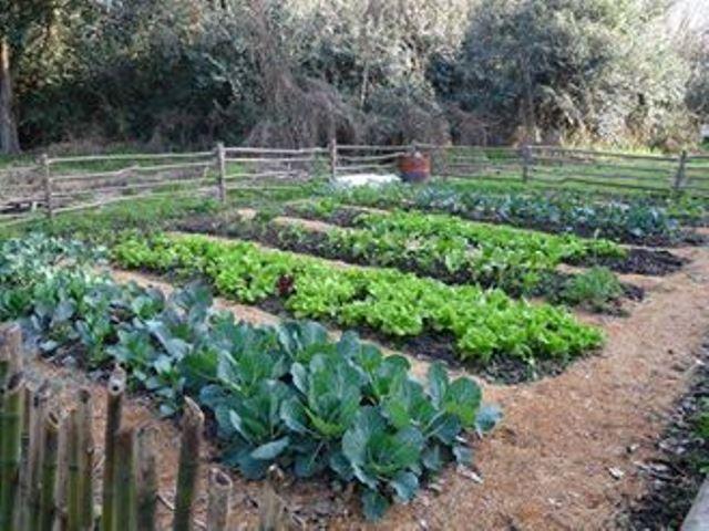 Este lunes 15 de abril, a las 10 horas, habrá una charla informativa y entrega de semillas en el Rancho Museo La Palmira (38 y 25).