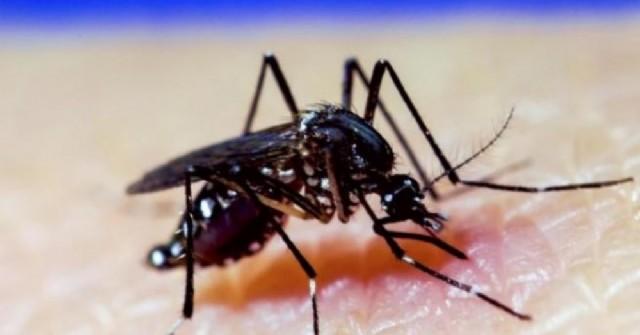 Sin mosquitos no hay dengue