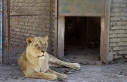 Llegaron las jaulas para el traslado de animales a Estados Unidos